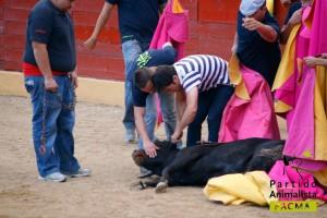 Tortura toro. jpg