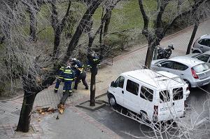 Bomberos retirando un árbol caído en Madrid